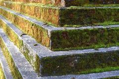 покрытые Мх шаги Стоковое Изображение RF