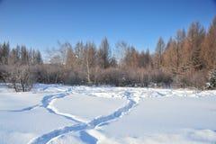 покрытые древесины снежка Стоковое Изображение RF