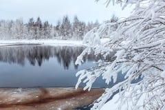 покрытые Снег белые ветви дерева на озере зимы Стоковые Изображения