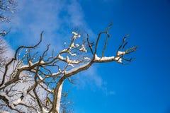 покрытые Снег ветви дерева против неба Стоковое Изображение