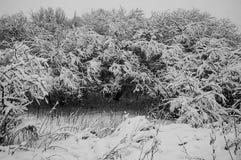 покрытые Снег деревья во время первого снега на зимний день стоковая фотография