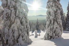 покрытые Снег деревья на наклонах горы на яркий солнечный день Стоковые Фото