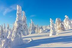 покрытые Снег деревья на наклонах горы на яркий солнечный день Стоковые Изображения RF