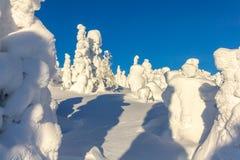 покрытые Снег деревья на наклонах горы на яркий солнечный день Стоковая Фотография RF
