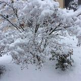 Покрытые Снег дерево и кустарники в зиме Стоковая Фотография