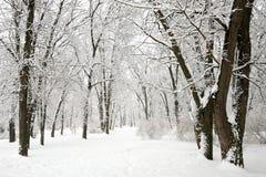 покрытые Снег деревья в парке Стоковые Фотографии RF