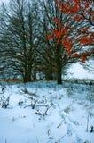 покрытые Снег деревья в холмах снега стоковое изображение