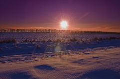 покрытые Снег деревья в холмах снега Стоковая Фотография RF