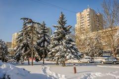 покрытые Снег деревья елей в городе Стоковое Изображение RF