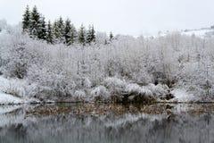 покрытые Снег деревья на воде Стоковые Изображения RF