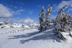 покрытые Снег ели в горах в зиме Стоковые Фотографии RF