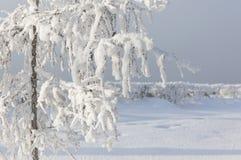 Покрытые снег и лед ветвей заморозка зимы Предпосылка дерева зимы Стоковое фото RF