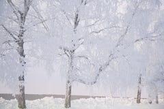 Покрытые снег и лед ветвей заморозка зимы Предпосылка дерева зимы Стоковая Фотография RF