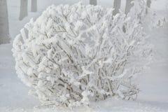 Покрытые снег и лед куста заморозка зимы Предпосылка дерева зимы Стоковая Фотография RF