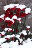 покрытые Снег цветки стоковые изображения rf