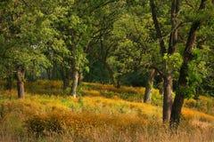 покрытые disies заколдовали желтый цвет пущи стоковое фото rf