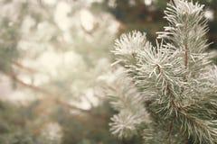 покрытый вал снежка ели Стоковая Фотография