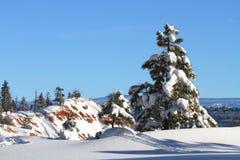 покрытый вал снежка сосенки Стоковые Фотографии RF