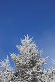 покрытый вал снежка шерсти Стоковая Фотография