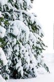 покрытый вал снежка шерсти Стоковые Изображения