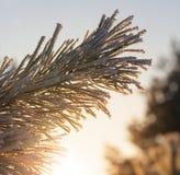 покрытый вал снежка Стоковые Изображения