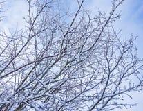 покрытый вал снежка Стоковые Фото