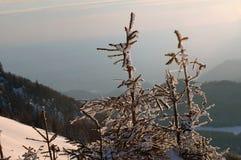 покрытый вал спруса снежка Стоковое фото RF