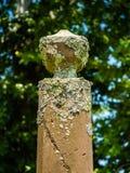 Покрытый Водоросл обелиск кладбища Стоковые Фото