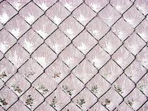 покрытый заморозок Стоковые Изображения