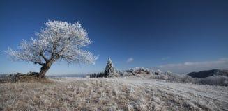 Покрытый изморозью ландшафт горы стоковое изображение rf