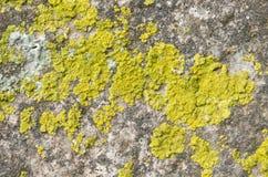 покрытый камень лишайника Стоковые Изображения RF