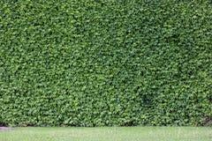 Покрытый кирпич стены Стоковые Фото