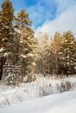 покрытый край около древесины снежка дороги Стоковые Фотографии RF