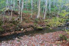 Покрытый лист банк ясного потока горы в холмах сельского бретонца накидки осенью стоковые фотографии rf