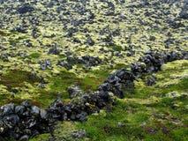 покрытый мох лавы поля Стоковое фото RF