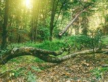 покрытый осенью упаденный ландшафт пущи земной выходит желтый цвет Стоковая Фотография RF
