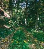 покрытый осенью упаденный ландшафт пущи земной выходит желтый цвет Стоковые Фотографии RF