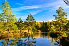 покрытый осенью упаденный ландшафт пущи земной выходит желтый цвет Стоковое Фото