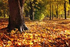 покрытый осенью упаденный ландшафт пущи земной выходит желтый цвет Упаденные листья осени покрывая деревья осени земли и леса Стоковые Изображения