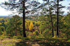 покрытый осенью упаденный ландшафт пущи земной выходит желтый цвет wildlife Древесина от различных деревьев стоковые изображения rf