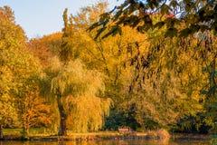 покрытый осенью упаденный ландшафт пущи земной выходит желтый цвет Золотой пейзаж осени Осень падение A Стоковые Фотографии RF