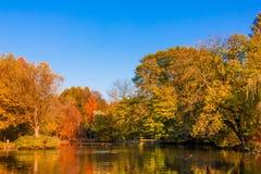 покрытый осенью упаденный ландшафт пущи земной выходит желтый цвет Золотой пейзаж осени Осень падение A Стоковые Изображения