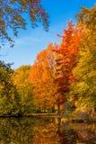 покрытый осенью упаденный ландшафт пущи земной выходит желтый цвет Золотой пейзаж осени Осень падение A Стоковая Фотография RF