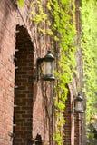 покрытый плющ сада освещает стену Стоковые Фотографии RF