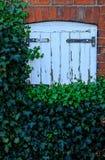 покрытый плющ двери Стоковые Изображения RF
