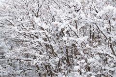 Покрытый снегом ландшафт зимы Стоковые Фото