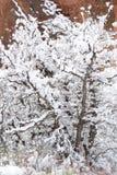 Покрытый снегом ландшафт зимы Стоковое фото RF