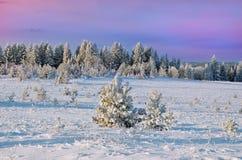 покрытый Снег лес зимы Стоковые Фото
