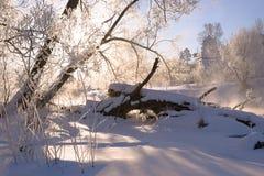 покрытый Снег живописный windbreak Стоковые Изображения RF