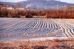 покрытый Снег ландшафт стоковое фото rf